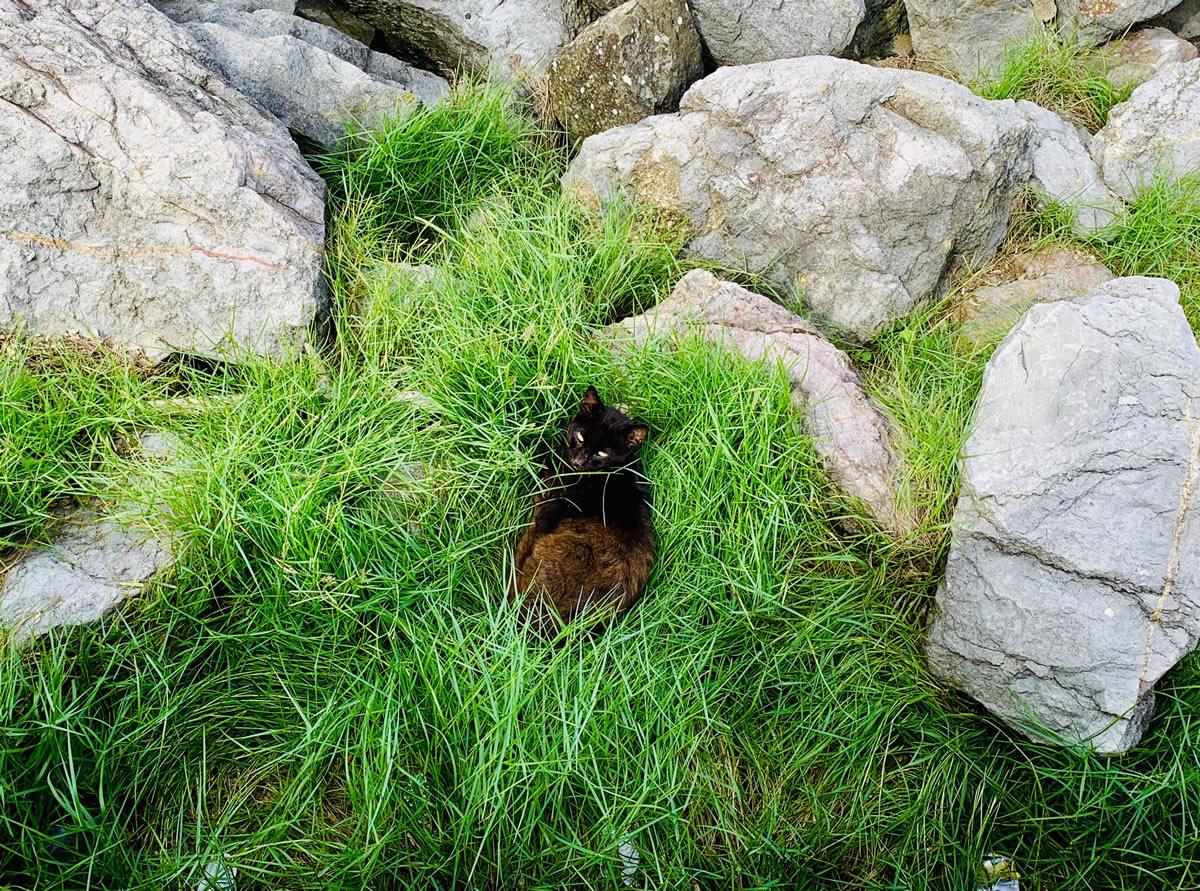 Confortable hierba