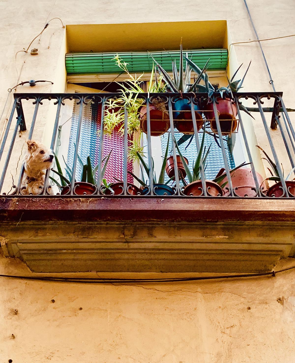 Perro en el balcón